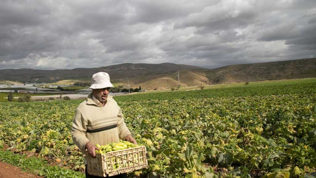 Tightened Anti-Coronavirus Measures in Palestine Double Local Farmers' Losses